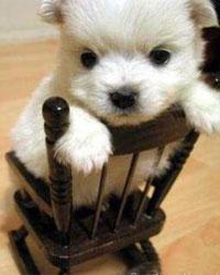 cutie2